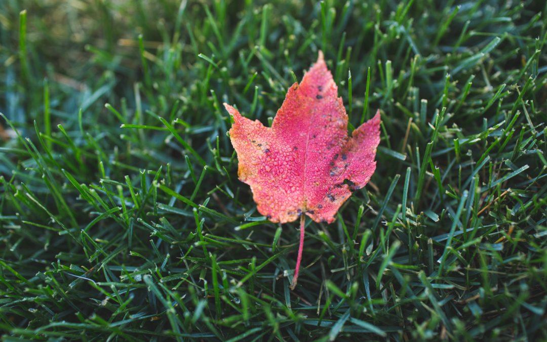Velký přehled podzimních trávníkových hnojiv