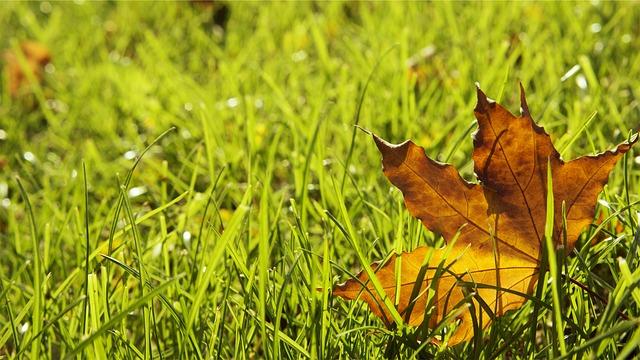 Návod na podzimní údržbu trávníku