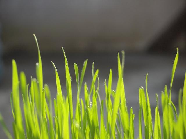 Péče o trávník v předjaří