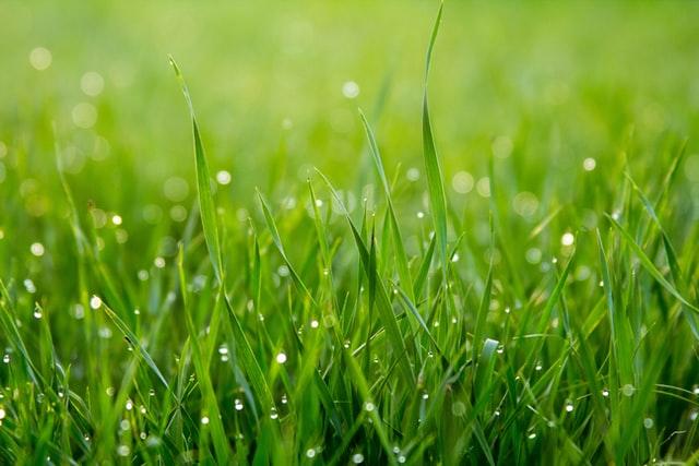 Princip vertikutace trávníku