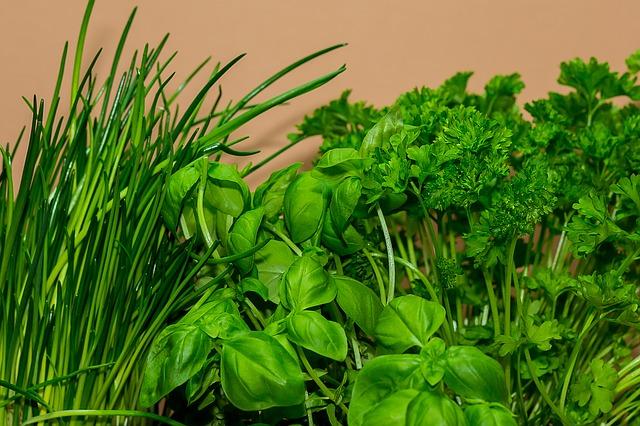 Návod: Jak pěstovat bylinky
